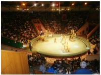 Незабываемая поездка в цирк